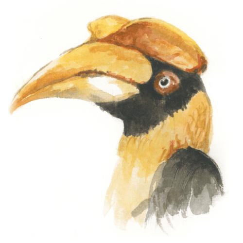 The Door - Bottled Cocktail - Nashornvogel